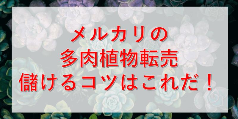 メルカリの多肉植物転売で儲ける方法